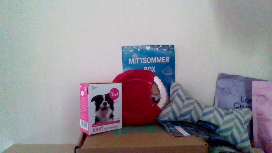 Hundpaket Rocky box