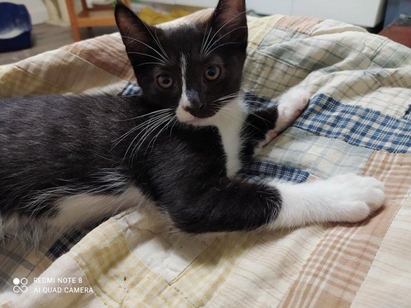 Underbara kattungar