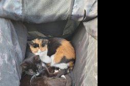 Sött syskonpar 2 st Katter